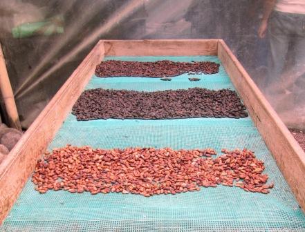 Dried beans